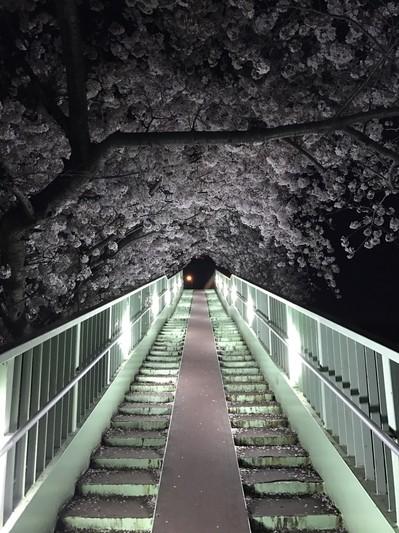 浜松サクラ.jpg