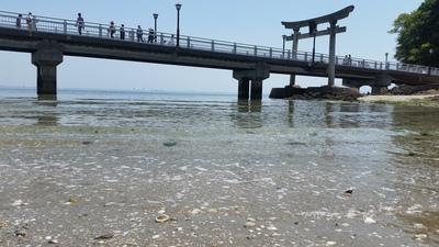 竹島海から.jpg