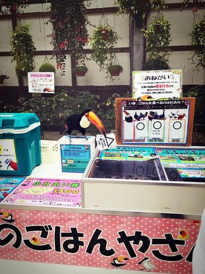 花鳥園オニオオハシ.jpg