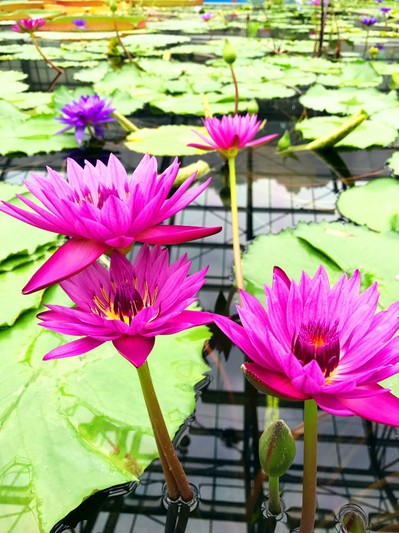 花鳥園花4.jpg