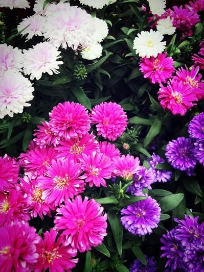花鳥園花5.jpg